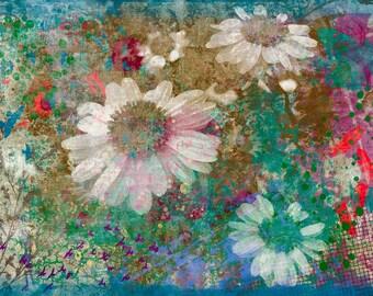 Happy daisies - Happy daisies