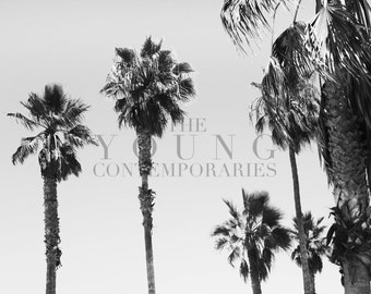 Venice Beach California Palm Trees (Digital Photograph Download)