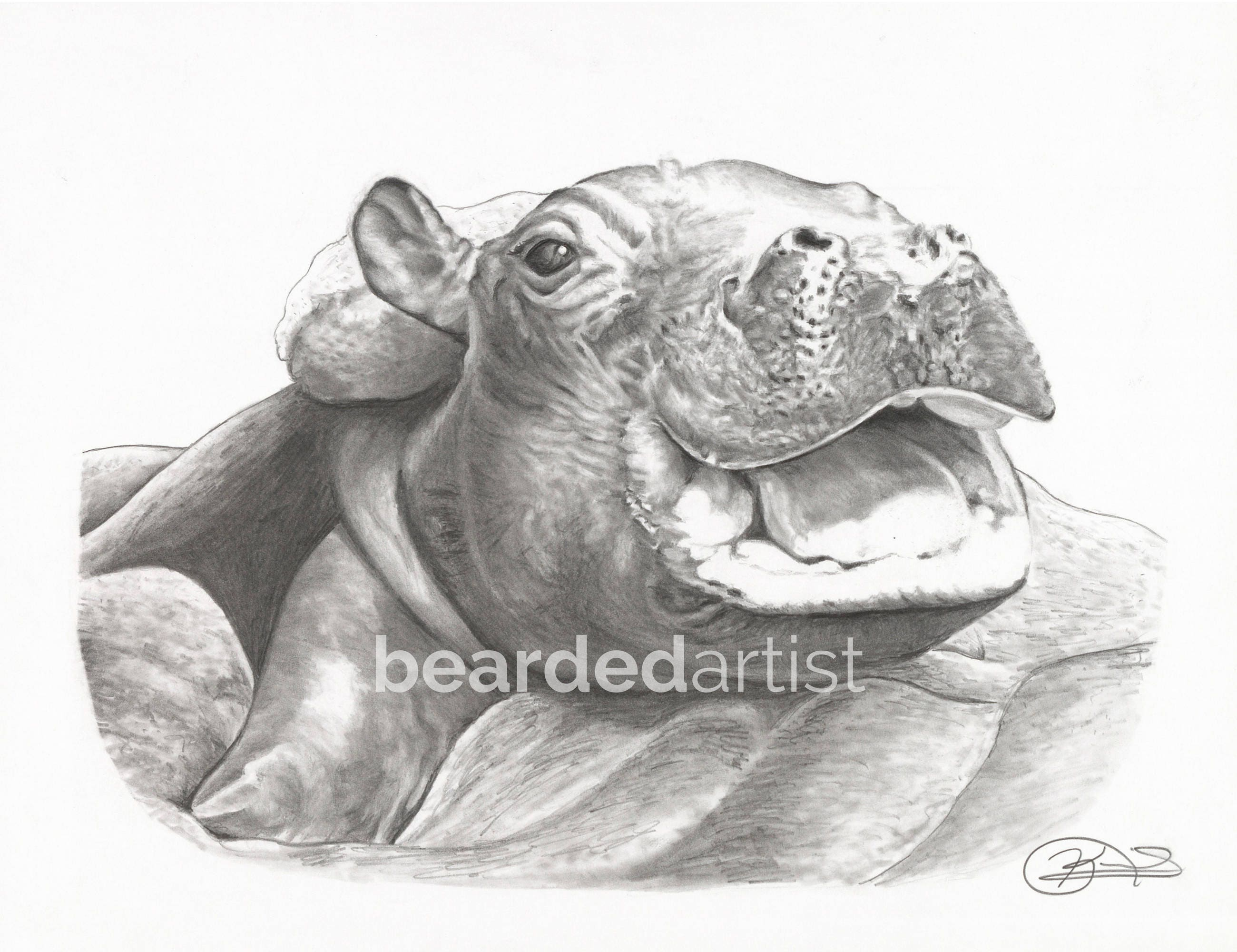 8.5x11 OR 11x17 Print of Fiona the Hippo from the