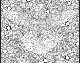 Hummingbird Detailed Colouring Page