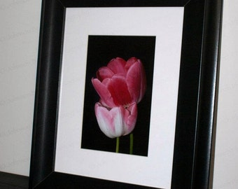 Pink Tulip Photography