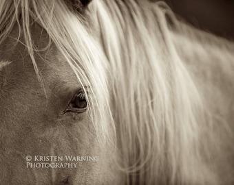 Horse Eyes, Sepia Photos, Horse Photos, Equine Art, Eyes, Equine Eye