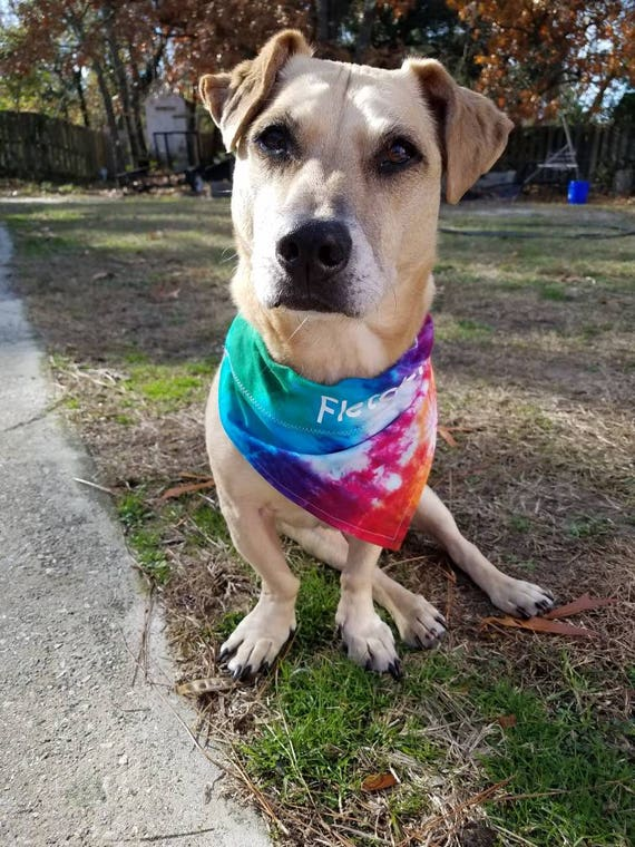 Tie Dye Dog Bandana Tie Dye Collar Bandana  Tie Dye Dog Gift Personalized Dog Bandana Tie Dye Over the Collar Bandana