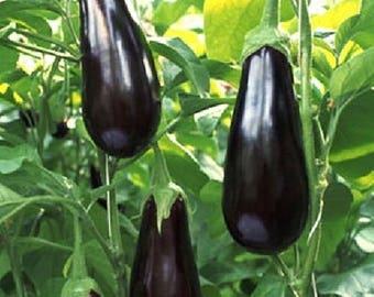 Eggplant Black Beauty 25+ seeds - heirloom seeds - vegetable seeds - garden seeds - eggplant  seeds - purple eggplant seeds - seeds