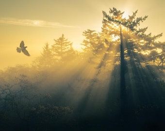Flying Home: 8x10 landscape photography print. Also available in many sizes or as a canvas or greeting card.