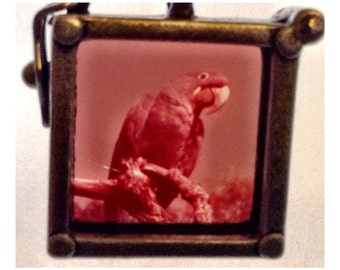 Parrot Necklace, Vintage 35mm slide, Florida, 1960's