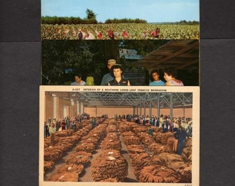 3 Tobacco Postcards,Postcards, UNUSED Postcards,Cigarettes, Tobacco Growing Postcards,Tobacco Related Postcards