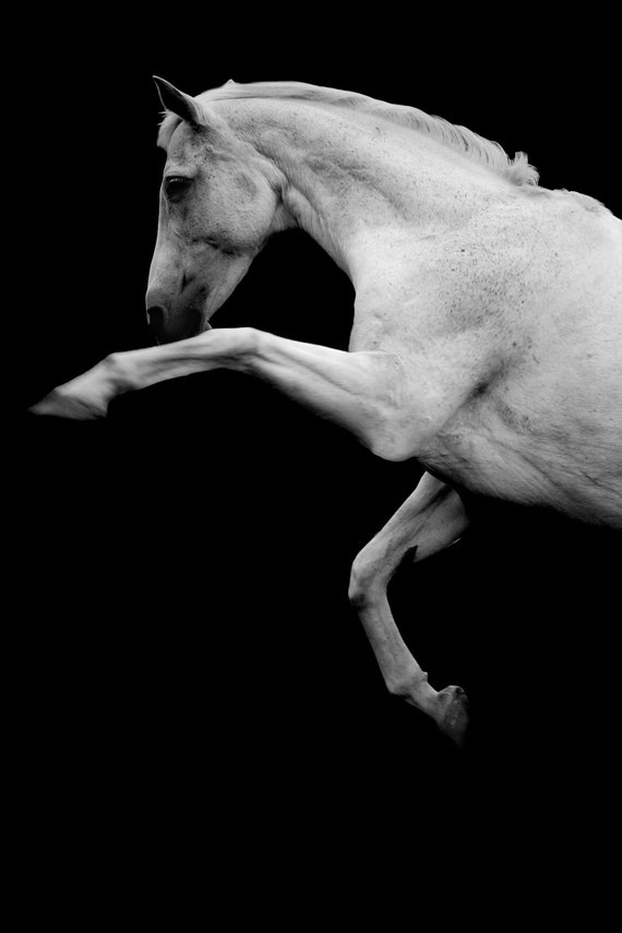 Black And White Horse Photography Prints