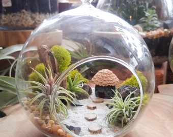 Air Plant Terrarium Kit - DIY Miniature landscape Featuring a Handmade Hut, 3 Air Plants, Driftwood, Lichens and More
