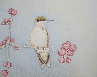 Pencil Art Work Hummingbird On A Branch With Berries Original Drawing-Print