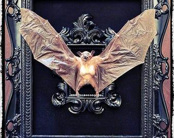 Taxidermy Bat in a Medium Double Frame