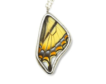 Tiger Swallowtail Butterfly Wing Necklace. Real butterfly wing pendant. Black and Yellow Butterfly Necklace.