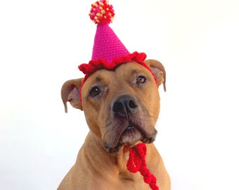 Party Hat, Dog Party Hat, Gotcha Day Hat, Gotcah Day Party, Dog Hat, Dog Accessories, Dog Collar, Pet Party. Dog Birthday Party