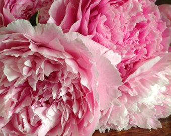 Fresh Pink Peonies! Alaska Grown+Free Shipping (2018 July or August Delivery)