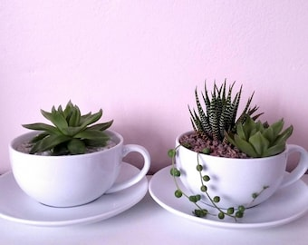 DIY Succulent in a Teacup, Succulent Gift, Succulent wedding favour, DIY gift