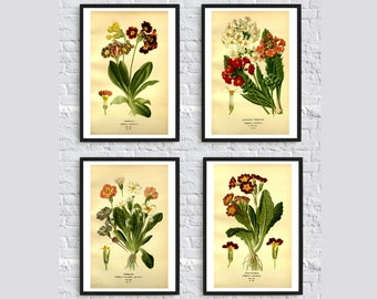 Primula flowers vintage botanical print illustration leaves plants illustration home decor wall art print SET of 4 red green popular poster