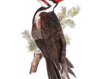 Watercolor painting - Pileated Woodpecker - archival print - Bird art