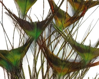 """Peacock Sword, 10 Pieces - 10-12"""" NATURAL GREEN Peacock 'T' Curved Tail Feathers : 4060"""