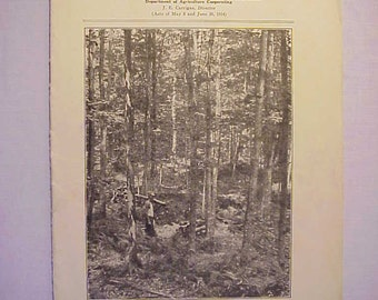 1936 Growing Timber on the Vermont Farm University of Vermont and State Agricultural College Burlington, VT. Circular 90, Farming Booklet