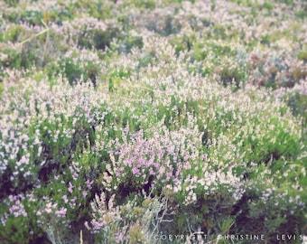 Lavender Heather - photography, art, print, home decor, nature, floral, botanical, Scottish, heather, landscape