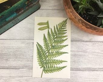 Outdoor Bracken fern print botanical art nature print plant wall art antique fern print woodland art fern illustration greenery print