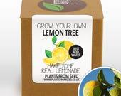 SALE NOW ON!!! - Grow Your Own Lemon Tree Plant Kit