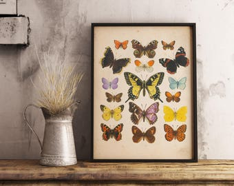 Butterflies Vintage Print - Insect Print Illustration - Printable Art - Instant Download