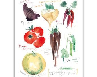 Heirloom vegetable print, Kitchen wall decor, Vegetable poster, Watercolor painting, Veggie illustration, Vegan art, Home decor Food artwork