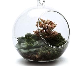 GLASS BOWL Hanging Terrarium Or Tabletop. Plant Indoor Outdoor Succulent  Air Plant Moss Bonsai Garden Decor Vintage Gift Handmade Terrarium