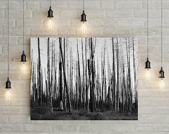 Burned Forest, Northern Arizona, Black and White Photography, Apocalypse, Arizona Photography, Symmetry, Surreal Wasteland Decor
