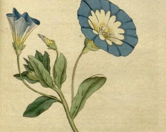 Botanic, Nature print, Botanical drawing, 27
