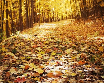 Nature photography, autumn, fall, gold, leaves, fine art, dreamy, photo print - Golden Path