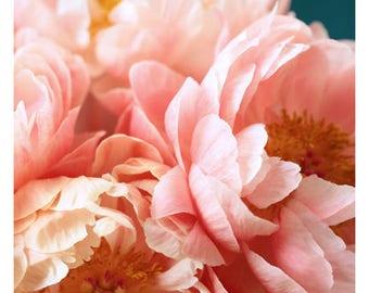 Nature Photograph - Peony Photograph - Flower Art - Spring Art - Margot - Fine Art Photograph - Floral Art - Botanical Art Print