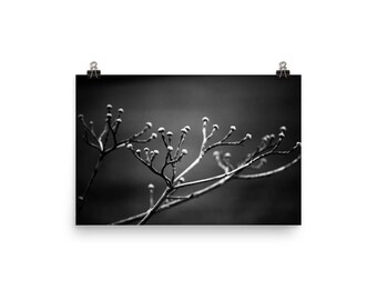 black & white tree branch print | nature photography | wall art