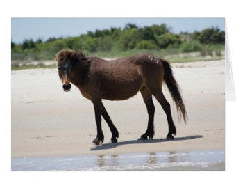 Pony in Charge Note Card