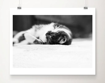 cat photograph cat print animal photography cat art black and white photography cats whiskers photograph nursery wall art