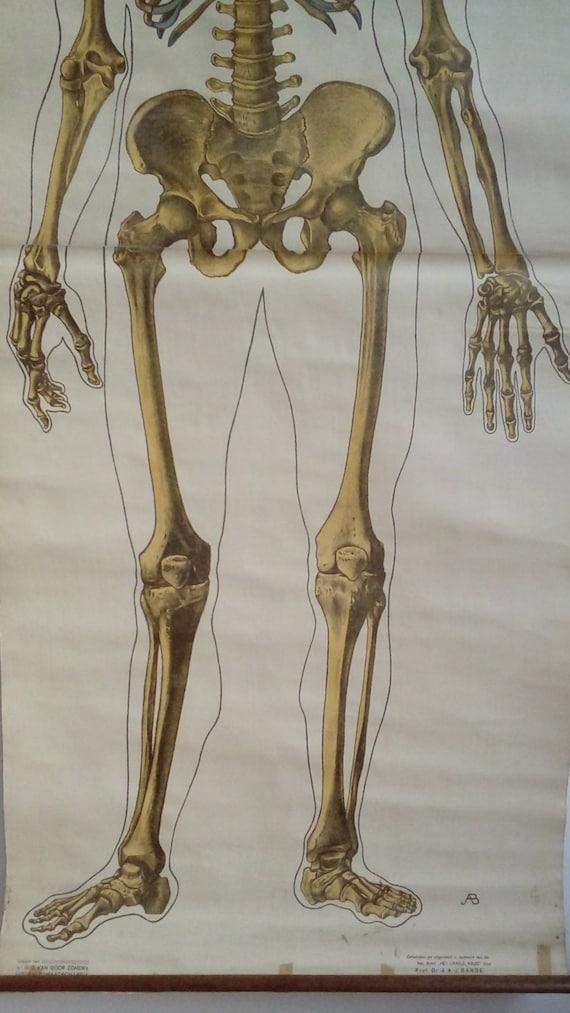 Skelett-Diagramm große Anatomie Poster Axial Skelett