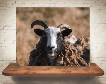 Horned Goat Photograph - Color Photo - Fine Art Print - Wall Decor - Animal Pictures - Wall Art - Farmhouse Decor - Gifts