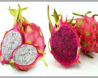 Red Dragon Fruit (Hylocereus costaricensis) & White Dragon Fruit (Hylocereus undatus) Seeds. You Get Both! Pitaya Cactus