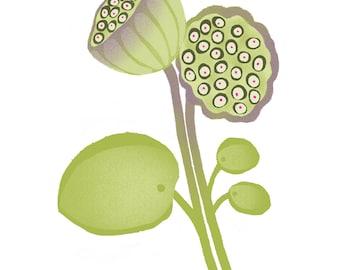 Lotus Seed Pod Illustration Art Print