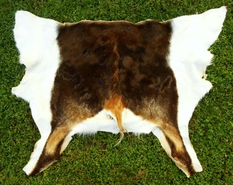 Texas Blackbuck Antelope pelt backhide