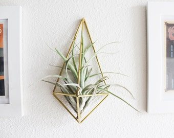 The Original Wall Sconce | Brass Air Plant Holder, Modern Minimalist Geometric Ornament