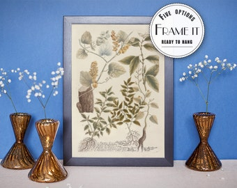 "illustration of Pareira Tree Branches  - framed fine art print, modern kitchen decor, wall art 8""x10"" ; 11""x14"", FREE SHIPPING 38"
