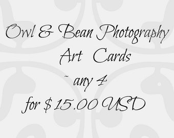 Set of 4, Greeting Cards, Photography Cards, Blank Inside, Owl and Bean Photography Art Cards, Your Choice
