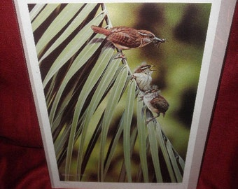 Danny O'Driscoll Print of an Original Painting of Wildlife Signed and Numbered