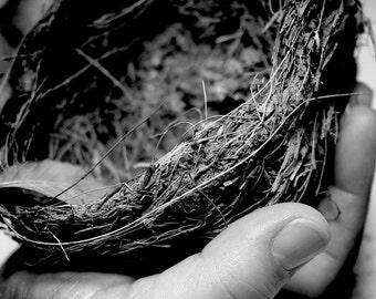 Nest & Cradle 8x10 B/W Professional Print by Jill Ensley