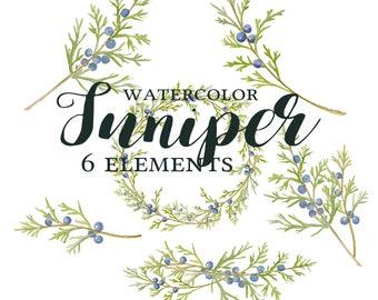 Juniper Clipart, Watercolor Juniper Branch Clipart, Juniper Wreath, Juniper Berries, Juniper Watercolor, Juniper Clipart