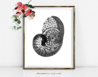 PEARLY NAUTILUS SHELL - digital image download - large printable antique sea shell illustration retooled for image transfer - totes, pillows