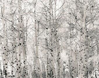 Snow photo, Colorado aspen wall art, winter white tree art, aspen trees decor, sepia decor, ski lodge decor, rustic cabin wall | First Snow