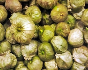 Grande Rio Verde Tomatillo Heirloom Garden Seed Non-GMO 50+ Seeds Naturally Grown Open Pollinated Gardening